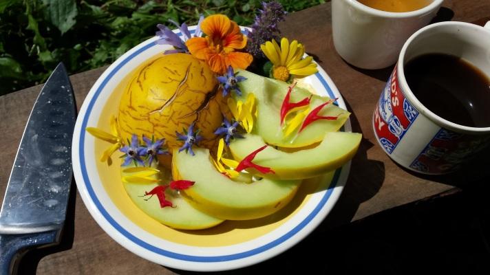 melonflowers.jpg